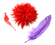 Feather Accessories